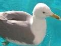 Spiel Seagull: Sliding Puzzle