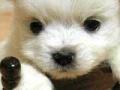 Spiel Cute puppy