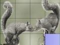 Игра Squirrels in love