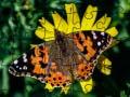 Gioco Jigsaw Puzzle: Spring