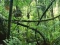 Jeu Jigsaw puzzle: Rainforest