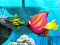 Игра Big Fish Eat Small Fish