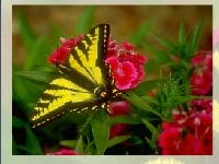 Игра Butterfly puzzle