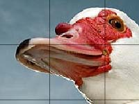Игра Red beak