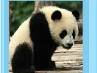 Игра Panda puzzle