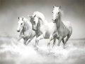 Igra Horses Puzzle