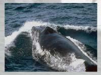 Игра Whales