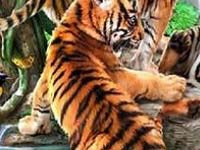 Игра Funny tigers