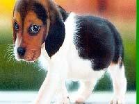Игра Funny dog 3