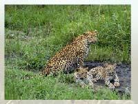Игра Leopard 2