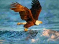 Joc Animals Jigsaw Puzzle Eagle