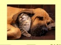 Игра Cute Cat And Dog