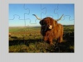 Gra Highland Cow Jigsaw