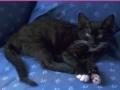 Игра Jigsaw World: Kittens